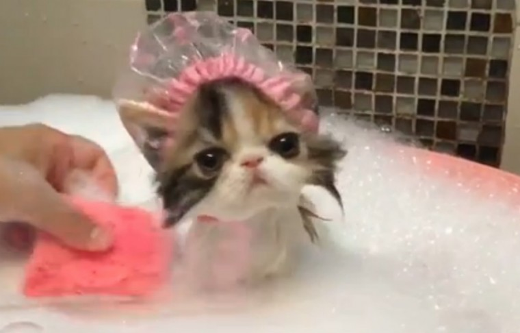 jong-poesje-bad-badmutsje