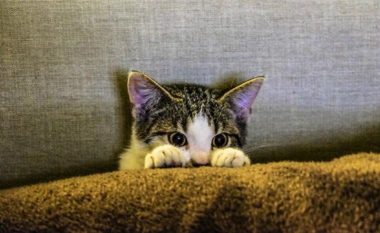 jonge-kat