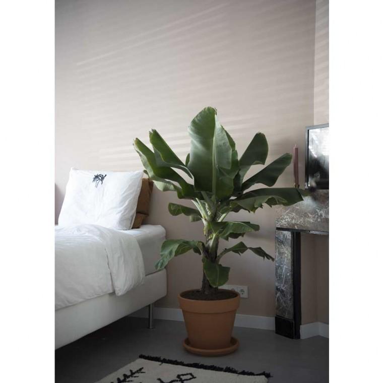 Musa (Bananenplant)
